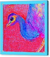 Funky Peacock Bird Art Prints Acrylic Print