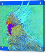 Funky Sulphur Crested Cockatoo Bird Art Prints Acrylic Print