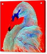 Funky Swan Blue On Red Acrylic Print