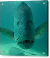 Funny Fish Face Acrylic Print