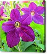 Funny Flower Faces Acrylic Print
