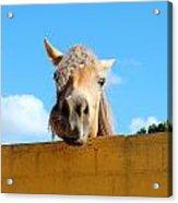 Funny Horse Acrylic Print