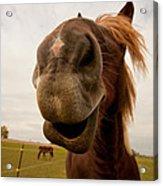 Funny Horse Acrylic Print by Paulina Szajek