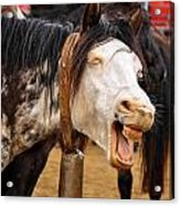 Funny Looking Horse Acrylic Print