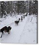 Fur Rondy Races Acrylic Print