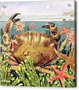 Furrowed Crab With Starfish Underwater Acrylic Print