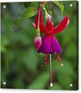 Fuschia Flower Acrylic Print by Ron White