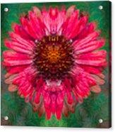 Fuscia Queen Acrylic Print
