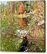 Fuzzy And The Reflected Tree Acrylic Print