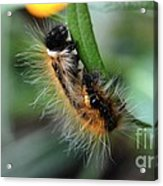 Fuzzy Caterpillar Acrylic Print