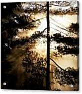 Fv5423, Perry Mastrovito Sunrise Though Acrylic Print