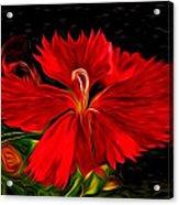 Galactic Dianthus Acrylic Print
