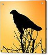 Galapagos Hawk Acrylic Print