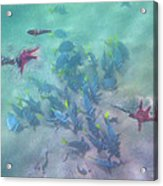 Galapagos Islands From Under Water Acrylic Print