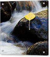 Galena Creek Trail  Acrylic Print