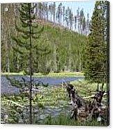 Gallatin River Yellowstone  Acrylic Print