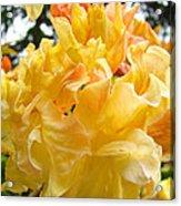Gallery Fine Art Prints Yellow Orange Rhodies Acrylic Print