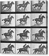 Galloping Horse Acrylic Print by Eadweard Muybridge