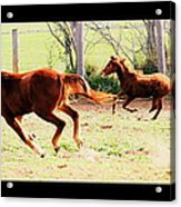 Galloping Horses Acrylic Print by Arie Arik Chen