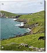 Atlantic Coast Of Ireland Acrylic Print