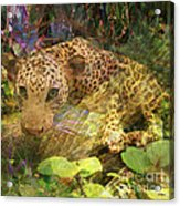 Game Spotting - Square Version Acrylic Print