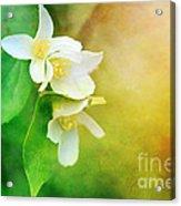 Garden Bliss Acrylic Print