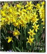 Garden Brighteners Acrylic Print