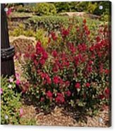 Garden Bush At Woodward Park 2f Acrylic Print