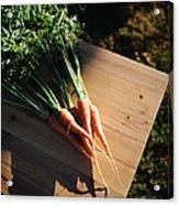 Garden Carrots On Sunny Stool Acrylic Print