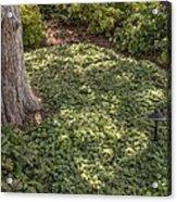 Garden Color At Woodward Park 21f Acrylic Print