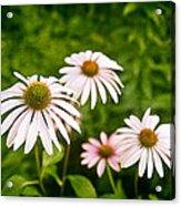 Garden Dasies Acrylic Print