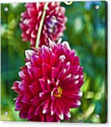 Garden Flowers Red Pink Getty Center   Acrylic Print