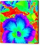 Garden Flowers / Solarized Effect Acrylic Print