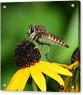 Garden Fly Acrylic Print