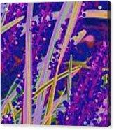 Garden Grass Acrylic Print