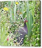 Garden Hen Acrylic Print