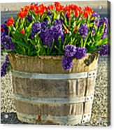 Garden In A Bucket Acrylic Print by Eti Reid