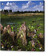 Garden In The Glades Acrylic Print