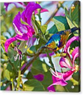 Garden Jewels Acrylic Print by Ashley Vincent