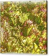 Garden Lettuce - Green Gold Acrylic Print