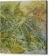 Garden Mist Acrylic Print by Patsy Sharpe