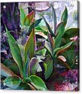 Garden Of Agave Acrylic Print