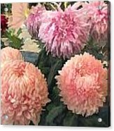 Garden Of Mixed Pink Chrysanthemums Acrylic Print