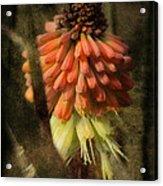 Garden Poker Flower Acrylic Print