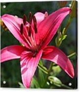 Garden Queen Acrylic Print