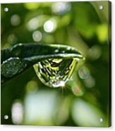 Garden Reflections Acrylic Print