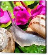 Garden Snails Acrylic Print