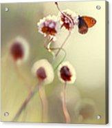 Garden Stories V Acrylic Print