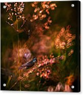 Garden Stories Viii Acrylic Print