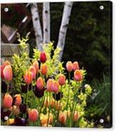 Garden Tulips Acrylic Print